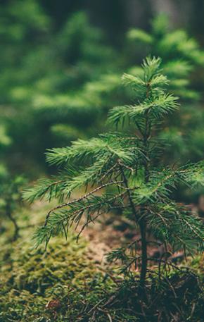 """Seis curiosidades que surpreenderão os leitores de """"A vida secreta das árvores"""""""