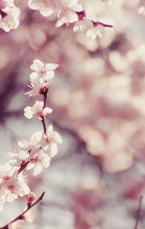 Ichigo-ichie e a valorização do momento: o que estamos vivendo agora não se repetirá nunca mais